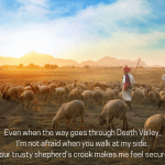 a shepherd and his flock of sheep walking into the sunset