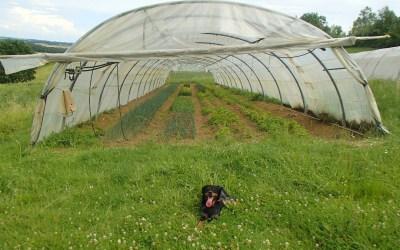 Des nouvelles d'Alexis, notre apprenti paysan!
