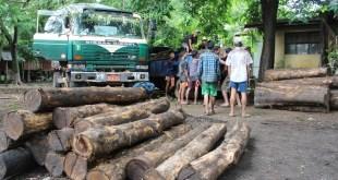 Seized teak logs (Photo: MNA/Mon Htaw)