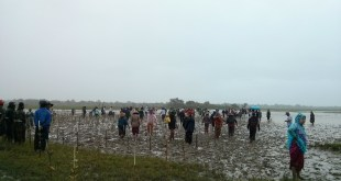 Group plants mangrove trees along Mon State coast (Photo: MNA)