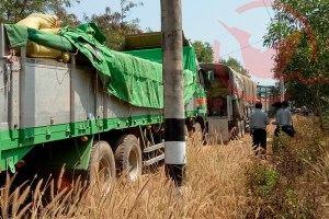 Seized trucks with illegal logs
