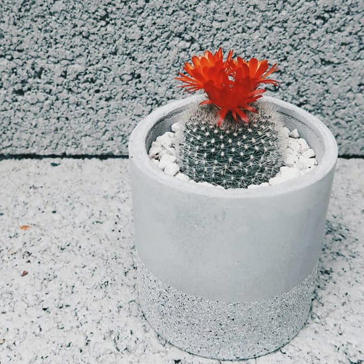 Concrete Design 水泥家飾・居家擺飾・植物生活・設計禮物