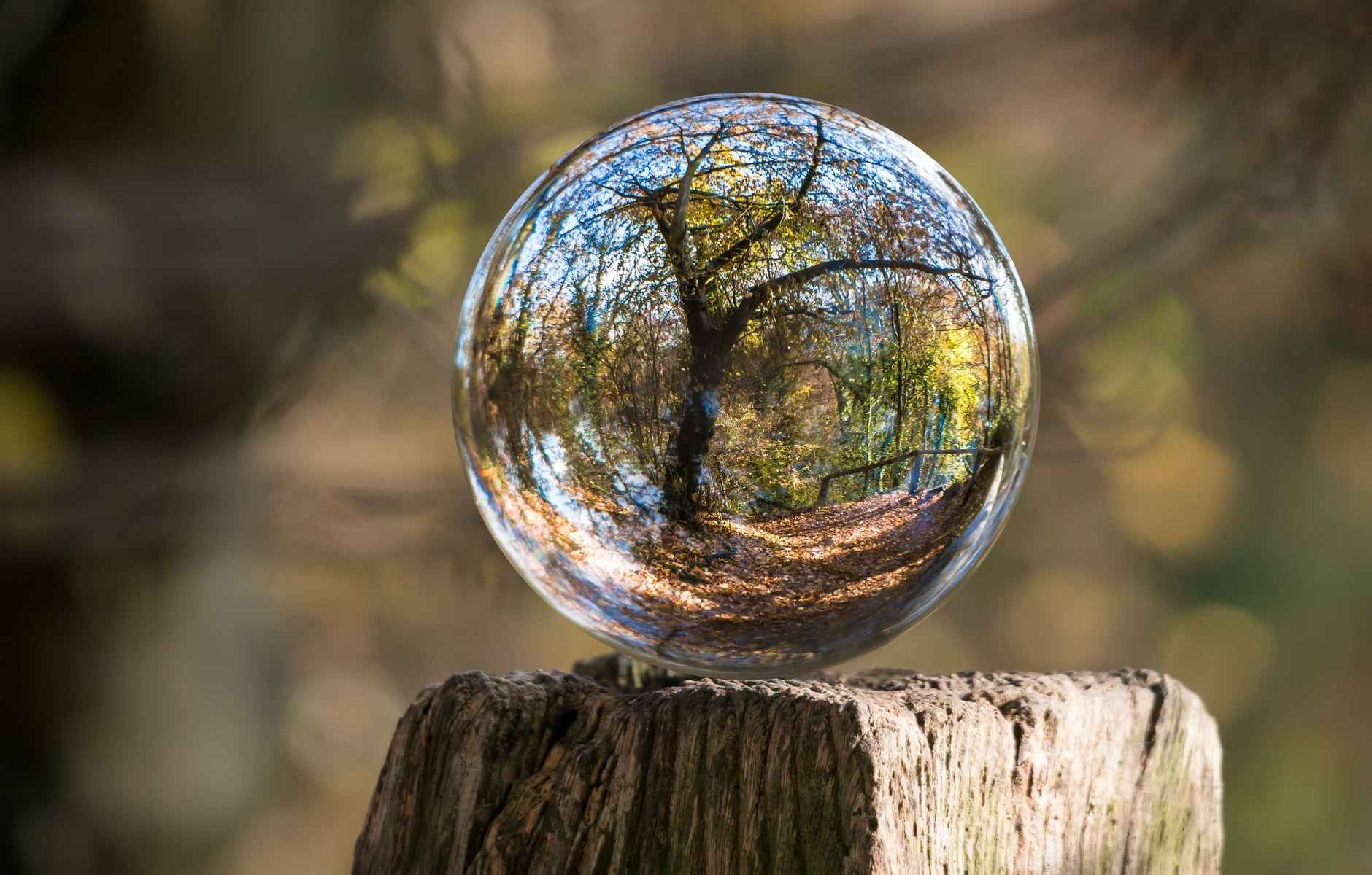 macro photography of tree