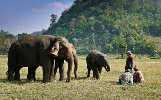 Elephant Nature Park Conservation, Thailand