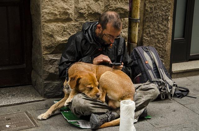 dog 1487553 640 - Câinii maidanezi- între iubirea pentru animale și responsabilitate față de cei din jur