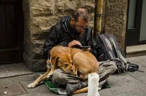 dog 1487553 640 300x198 - Câinii maidanezi- între iubirea pentru animale și responsabilitate față de cei din jur