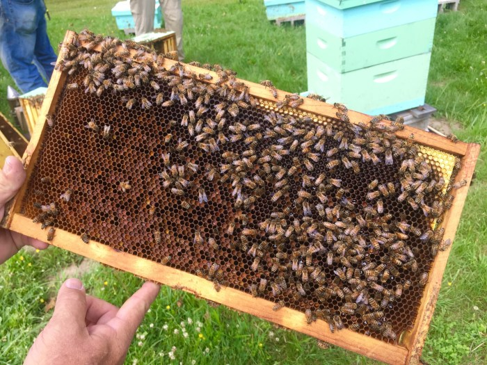 Bees at a thriving bee yard near Beckley, West Virginia.