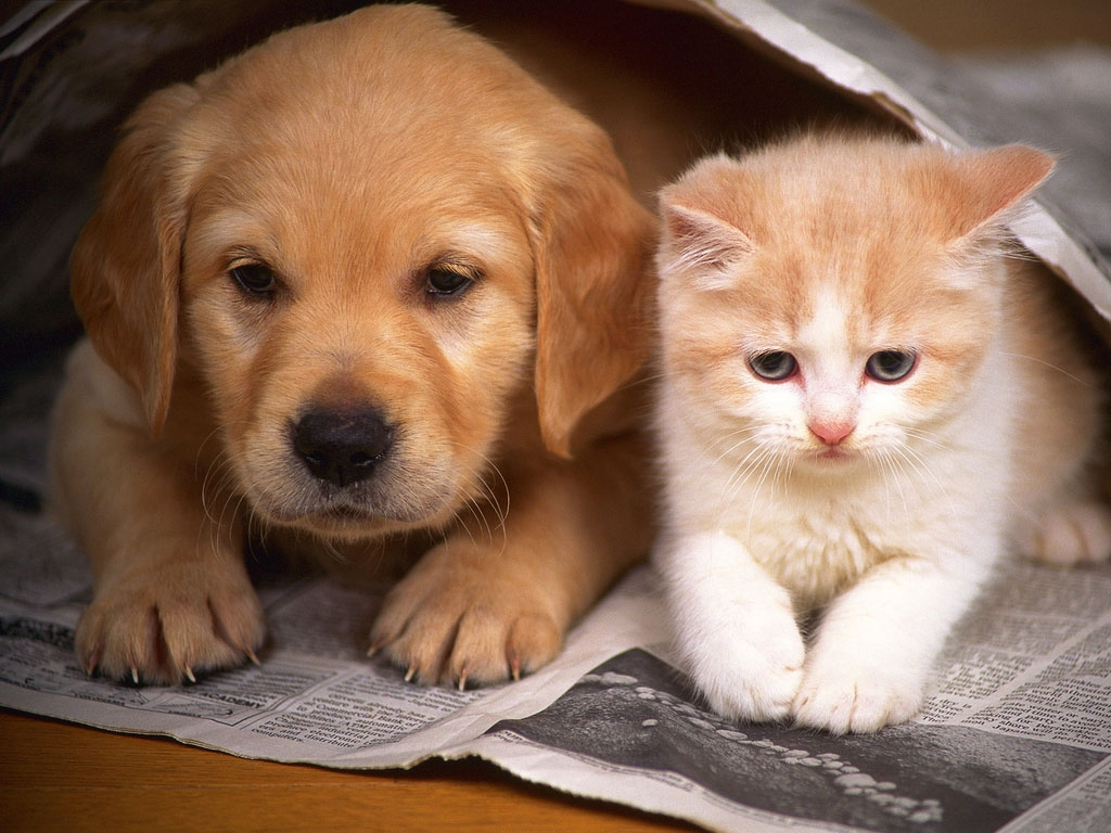 Dog And Cat A Tale Of Forbidden Love