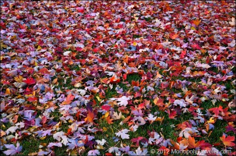 Leaves on the Ground Just Begging to be Raked
