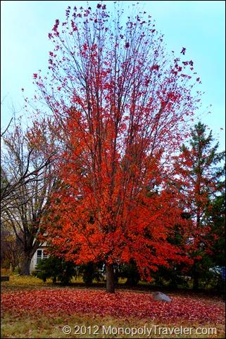 Freshly Fallen Leaves