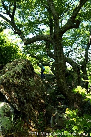 Climbing up Bearfence trail