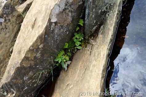 Plants growing in the rocks