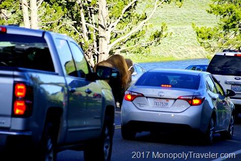 Wildlife causing a traffic jam