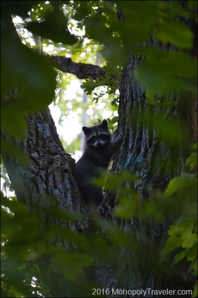 Being watched in the woods