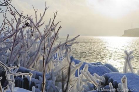 Ice Covered Shrubs