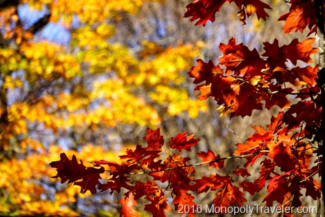 Red and yellow leaves showing their full glory before falling away