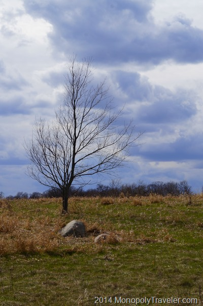 A Lone Tree on the Prairie taken with An Interchangeable Lens Camera