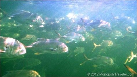 The School of Fish Returns
