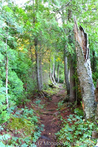 A portion of the beautiful trails on Isle Royale