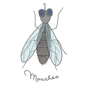 insecticides naturels contre les mouches - potager sur balcon