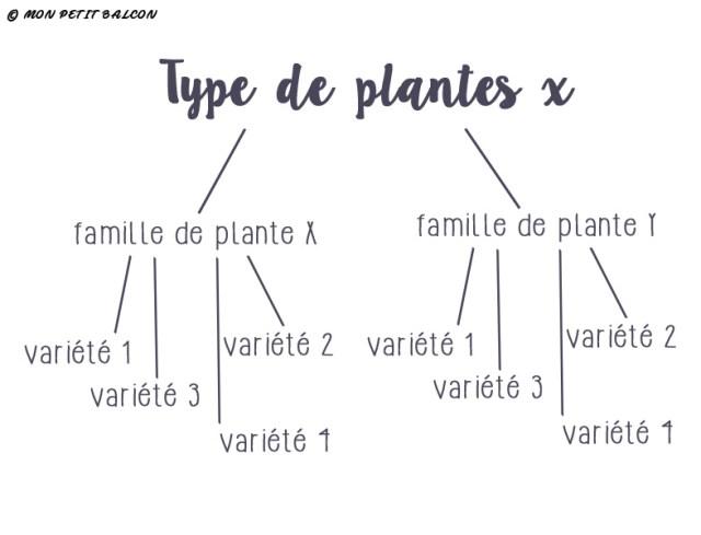 schéma type de plante, famille de plante, variétés de plantes