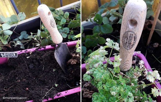 transplantoir dewit pour transplanter le persil sur mon petit potager de balcon de la jardinière au carré potager