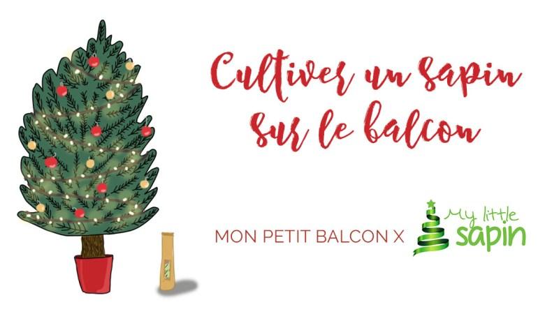 Mon sapin de Noël français en pot | My little sapin (avis)