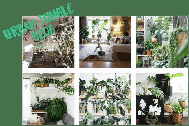 10 comptes Instagram pour voir la vie en vert en 2017 urban jungle blog