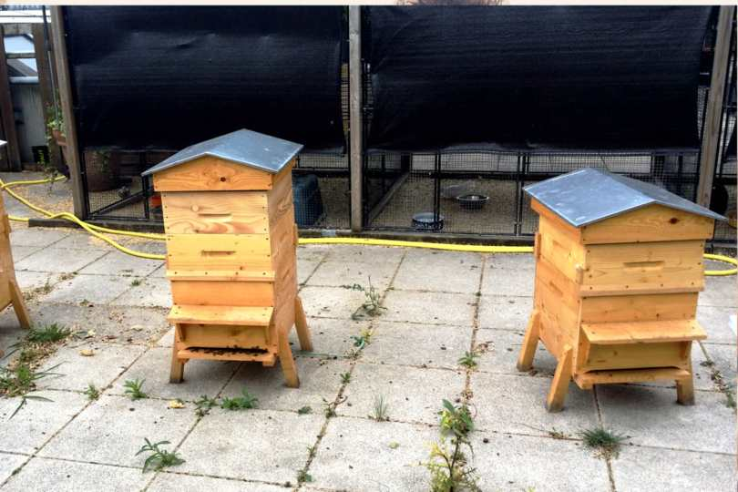 Apiculture urbaine avec CityBzz ruche à paris