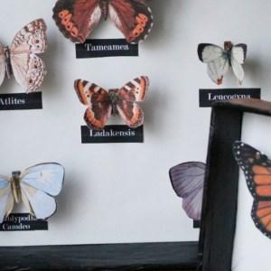 Cadre à papillon : taxidermie en papier (vegan)