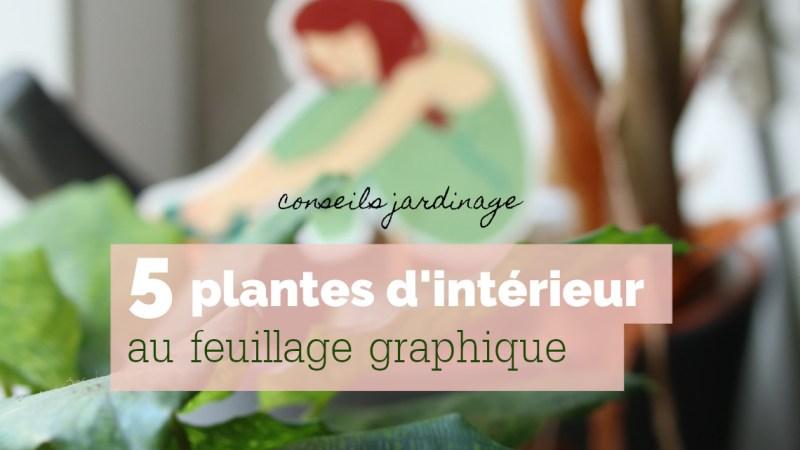 5 plantes d'intérieur au feuillage graphique et conseils jardinage