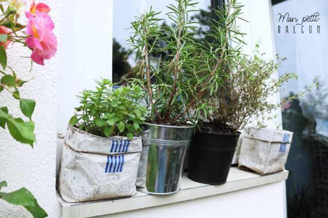 plante de romarin, thym et origan commun sur rebord de fenêtre balcon sans un sac à café