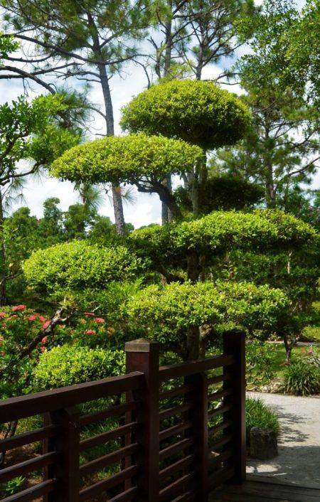 un jardin  ensoleillé avec des arbres de hauteur différentes au fond et des arbustes au premier plan.