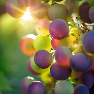 Nos vins Bio