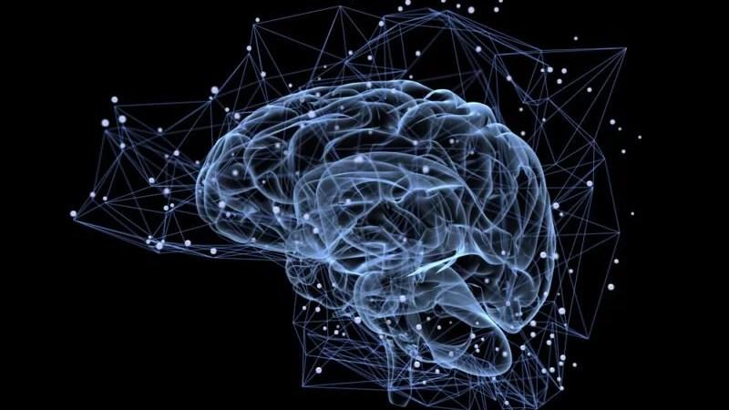 Qu'est-ce qui se passe dans votre cerveau quand vous êtes amoureux ?
