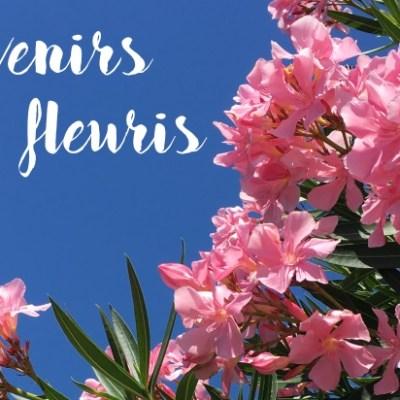 Hibiscus et compagnie