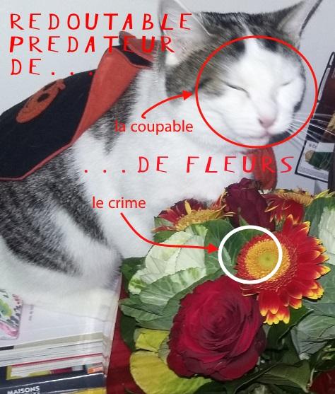 predateur-de-fleur
