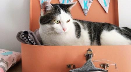 Une valisette + un 🐱 = un lit pour chat original !