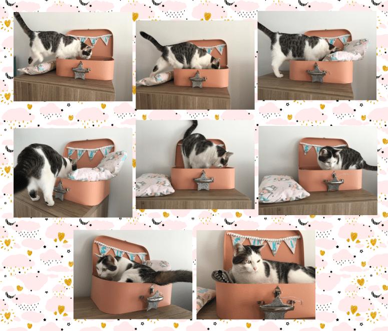 valisette chat testée et approuvée