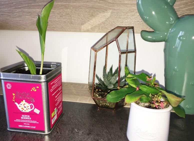 muguet et terrarium