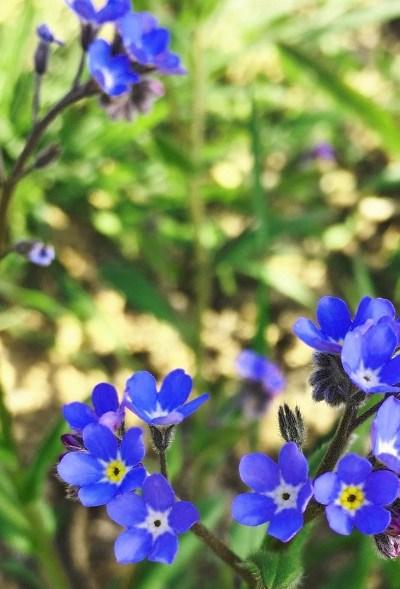 Quelques fleurs sauvages de saison