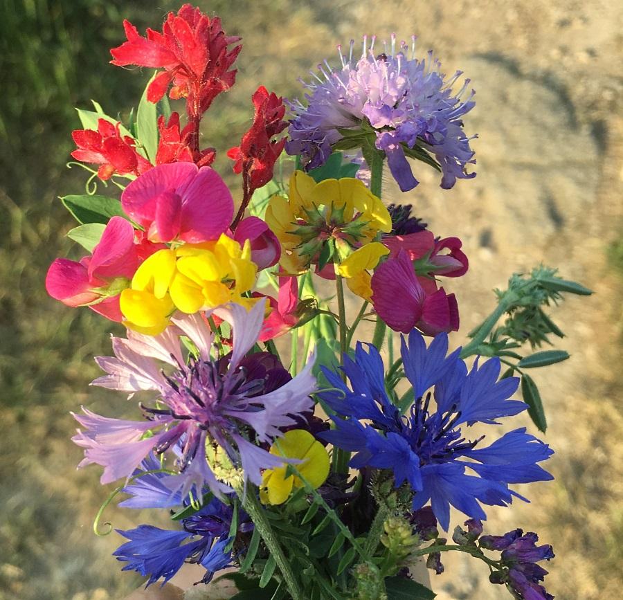 bouquet de fleurs des champs