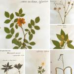 Quelques pages de mon herbier