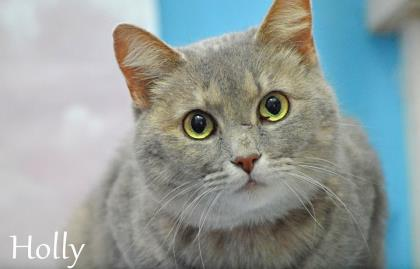 Monroe County Animal Shelter Holly the cat