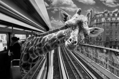 Copyright © Thomas Subtil et Clarisse Rebotier