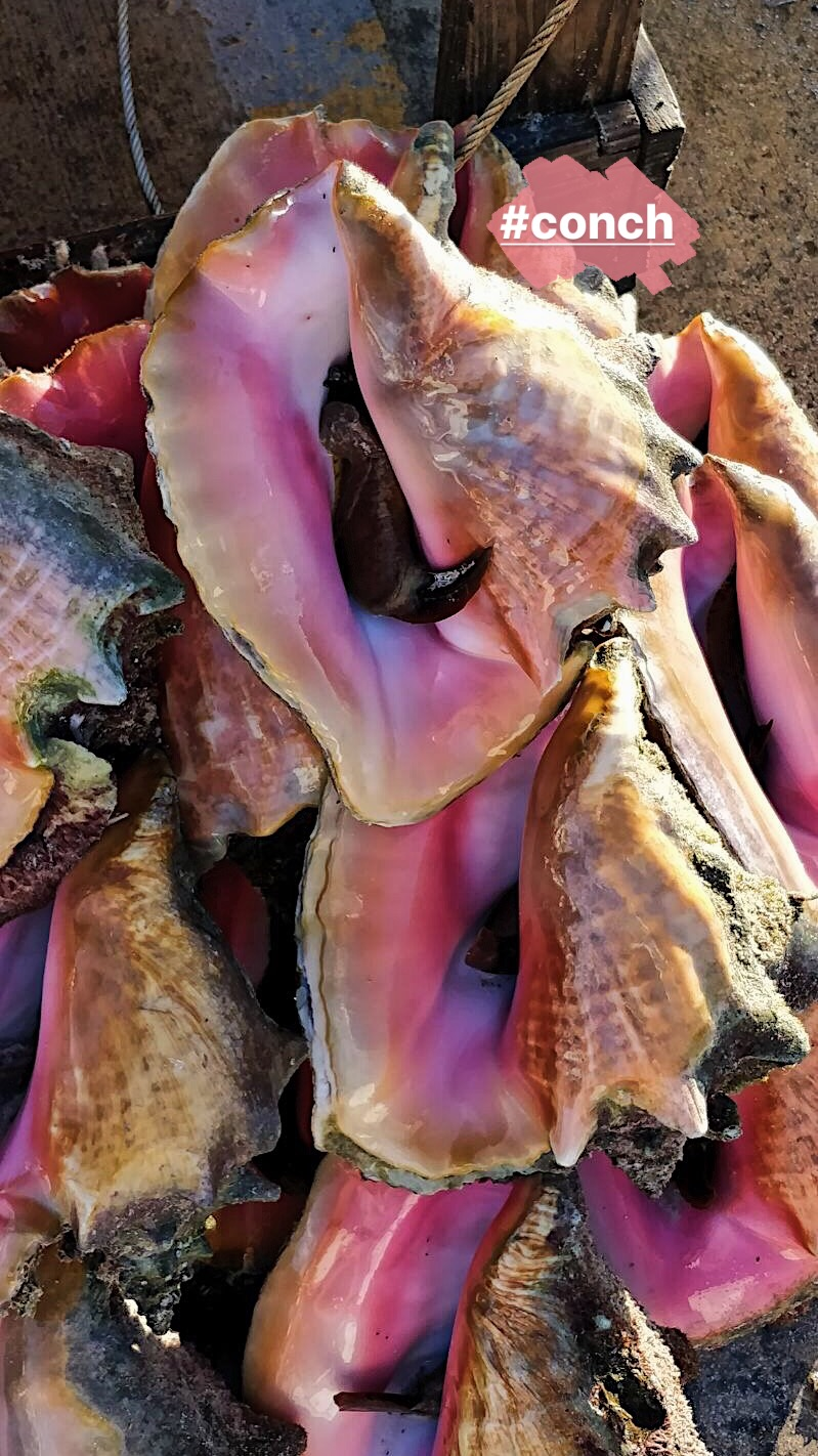 bahamas-voyage-séjour-rêve-eau-nassau-sandyport-airbnb-lestendancesdelilou-boris deltell-sorryformyfrench-magazine-monsieurmada.me-travel-vacances-caraibes-globe trotter-paradise-island-île-conch
