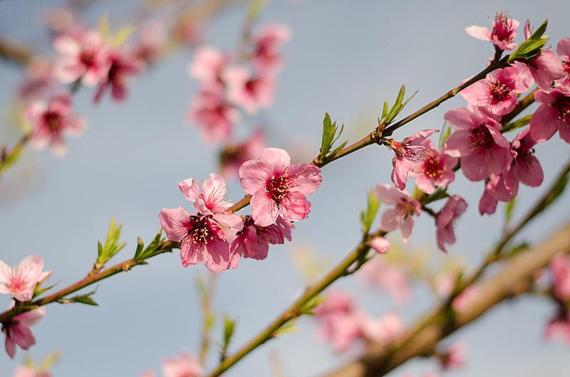 primavera fotografia flores naturaleza
