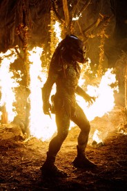 PredatorsBerserkerfire