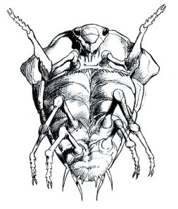 Arkellian Beetle concept art.