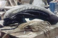 Alienheadstunto